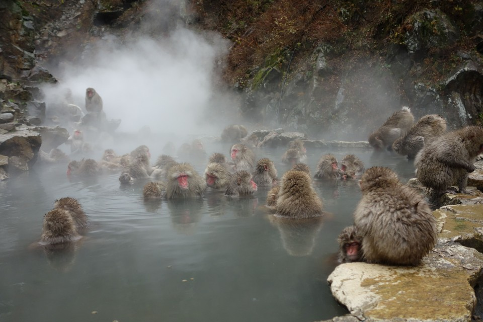 Jigokudani-Monkey-Park-Japan